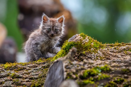 miserable: Miserable stray kitten