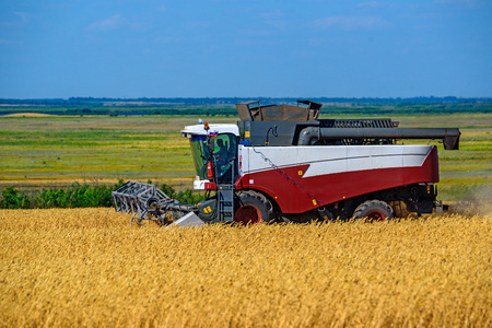 Grain harvesting combines work in wheat field