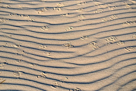 Sand dune with birds footprints