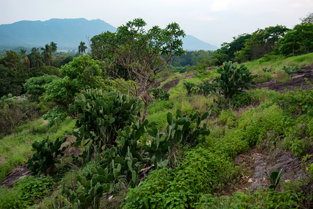 stone lion: Scenic view of Srilankan mountain forest