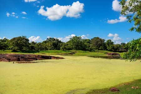 Toneel landschap van tropisch wetland