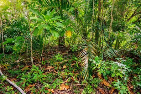Scenic view of jungle with palms Stockfoto