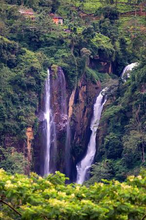 Scenic tropical waterfall in jungle