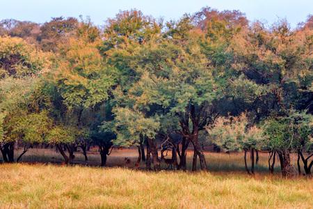 Landscape of Ranthambore national park, India. Stok Fotoğraf