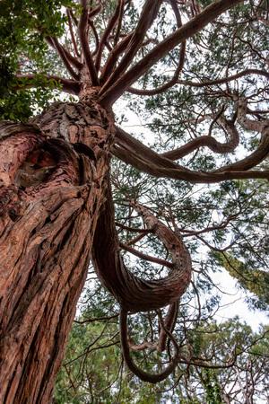 クルムホルツの木の下の眺め 写真素材