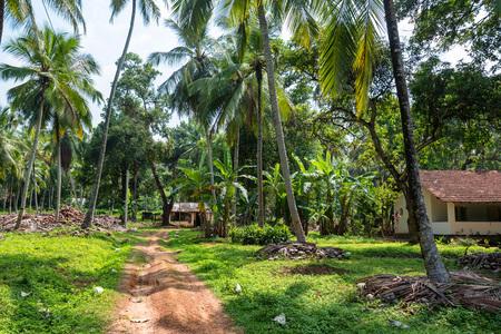 Coconut plantation in Asia