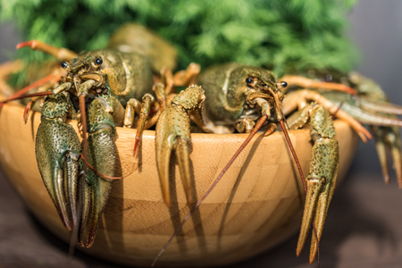 Raw crayfish with beer on wooden background Stock Photo