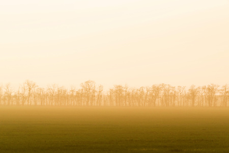 Windbreak belt with morning fog