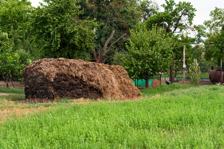 Pile of manure in back yard