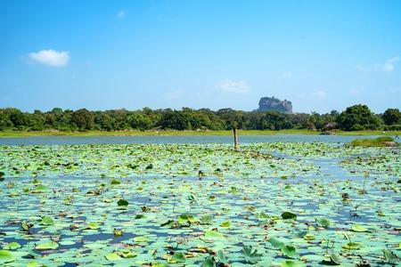 View of Sigiriya Rock or Lion Rock in Sri Lanka