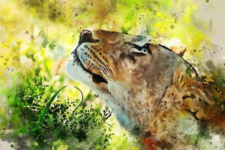 Digital splash watercolor painting of lioness close