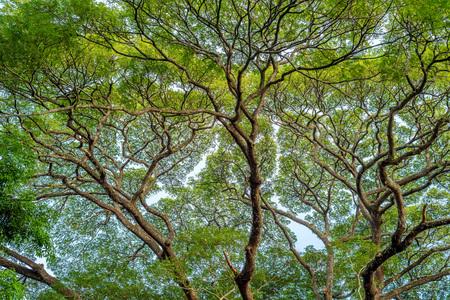 Crown of big green tree against blue sky 写真素材