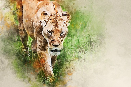 Watercolor painting of lioness walking in savanna Imagens