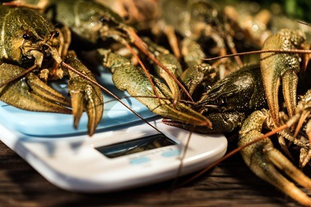 Raw crayfish with beer on wooden