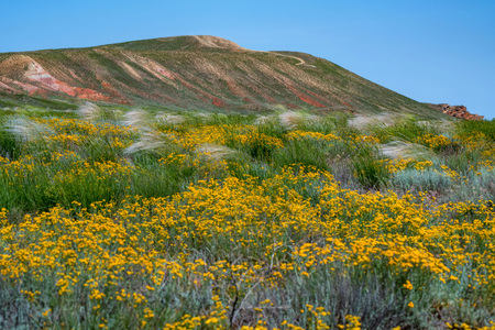 Amazing landscape of mountain Big Bogdo and blooming steppe against sky. Russia