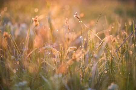 Beautiful with morning dew on grass close