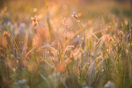 Bello con la rugiada mattutina sull'erba vicino