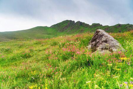 Single rock in blooming mountain meadow. Green pasture