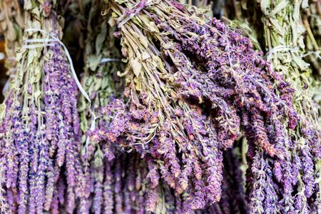 Close up bunches of sage herb or Salvia officinalis drying