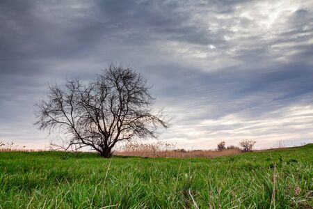 Lonely tree in summer steppe and sky beautiful landscape