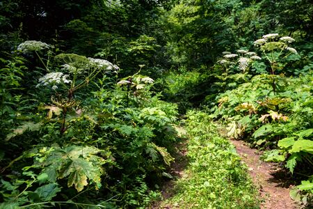 View of path or road in summer forest on sunny day