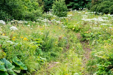 View of path or road in summer meadow with lush green plants on sunny day