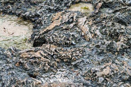 Close up littoral zone bottom in Zanzibar
