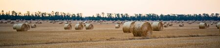 Panoramic view of big round haystacks on field in countryside