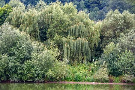 Peaceful landscape with green willow trees on river bank in steppe