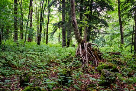 Green tress, grass and moss in a summer forest Stockfoto - 129111438