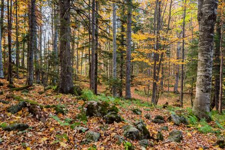 Scenic landscape of beautiful sunlit autumn forest Stockfoto - 129111463