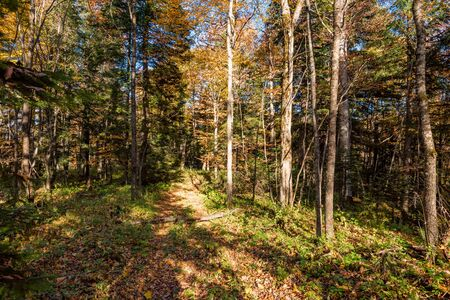 Scenic landscape of beautiful sunlit autumn forest Stockfoto