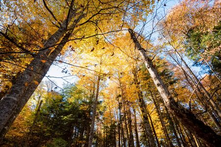 Bootom view trees in beautiful sunlit autumn forest Stockfoto