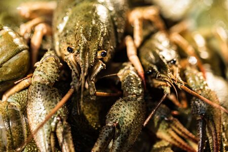 Raw crayfish with beer on wooden background Stockfoto