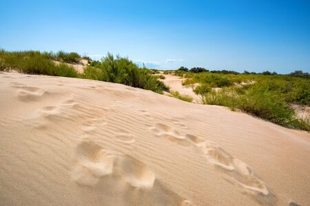 Semi-desert landscape with traces on sand on sunny day Stockfoto