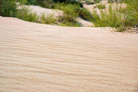 Semi-desert sand and vegetation close up image Stockfoto - 129111728