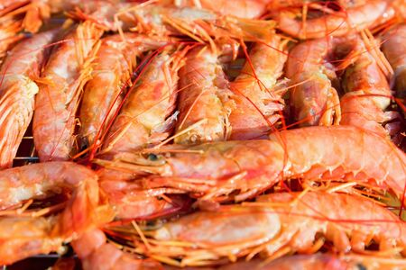Fresh raw langoustines close up as a background