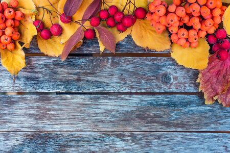 Thematic autumn flatlay background. Wooden planks, red leaves and berries Фото со стока - 131065438