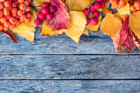Thematic autumn flatlay background. Wooden planks, red leaves and berries Фото со стока - 131065495