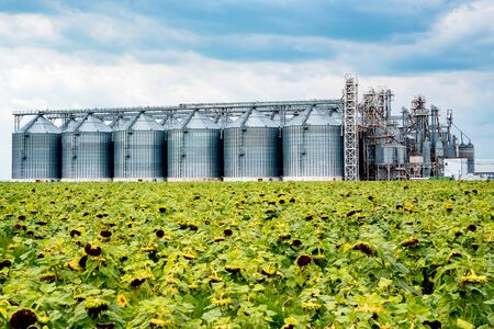 Distant view of sunflower oil refinery in a field Фото со стока - 131065511