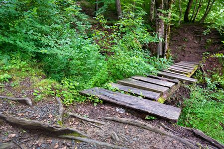 Small wooden bridge in green forest close