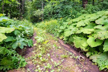 View of path in summer forest with lush wild vegetation on sides on sunny day Фото со стока