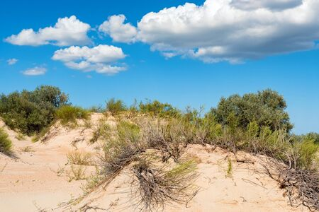 View of sand texture and green plants in semi-desert in summer Фото со стока - 132347936
