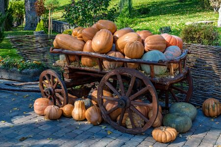 View of decorative cart with pile of ripe fresh pumpkins standing outdoors in a park. Haloween or Thanksgiving concept