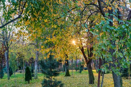 View of different green trees in park. Fir and deciduous trees together