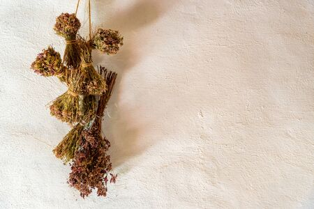 Bundles of dried herbs hanging against white wall
