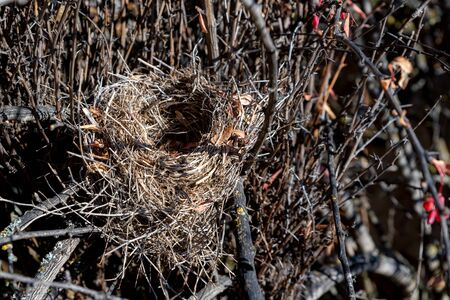 Close up nest in bare tree during autumn