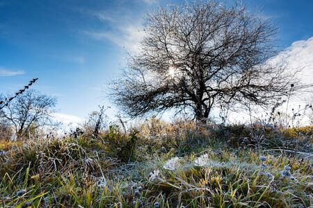 Sunny day in late fall countryside with dark tree and green grass Фото со стока - 136261510