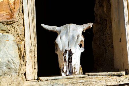 Bull skull on old wooden windoe in abandoned stone house