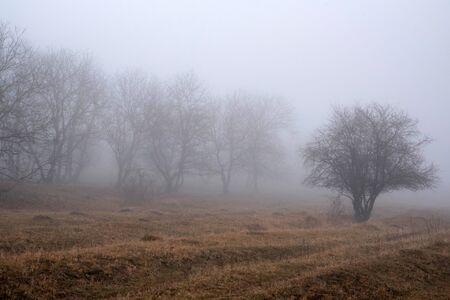 Depressing dark foggy countriside somewhere in Russia Фото со стока